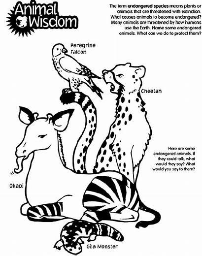 Animals Endangered Animal Crayola Coloring Wisdom Species