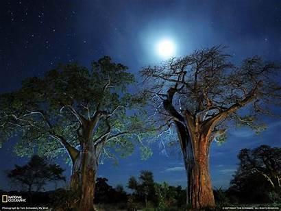 Geographic National Wallpapers Trees Geo Baobab Tanzania