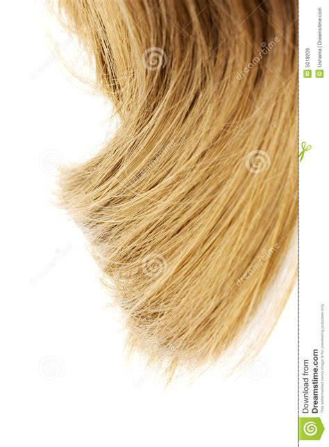 Flaxen Yellow Hair by Beautiful Flaxen Hair Lock Stock Image Image Of Bleached