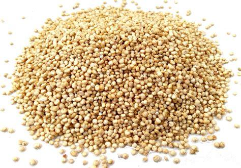 Baltā kvinoja - MangoSpices.lv
