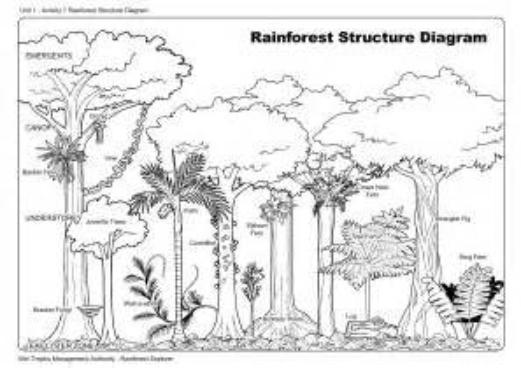 images  kindergarten worksheet parts   tree rainforest structure diagram chinese