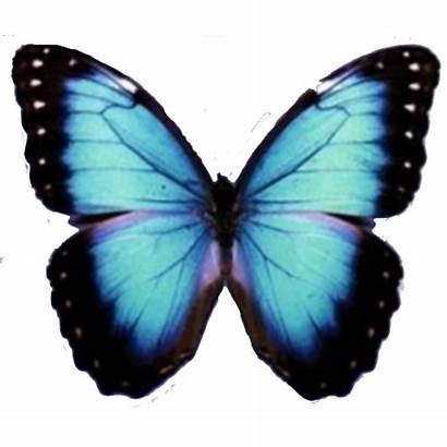 Butterfly Mariposa Transparent Background Convert Colors Inverted