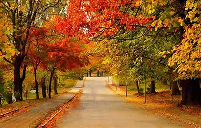 Autumn Fall Trees Road Leaves Colors Foliage