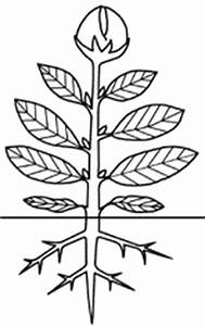 Aufbau Einer Blume : mediendatenbank biologie pflanzenzelle ~ Whattoseeinmadrid.com Haus und Dekorationen
