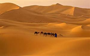 Sahara Full HD Wallpaper and Background | 1920x1200 | ID ...