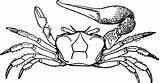 Fiddler Clip Clipart Cliparts Library Crab sketch template
