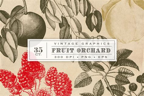 vintage fruit vector graphics graphic objects creative