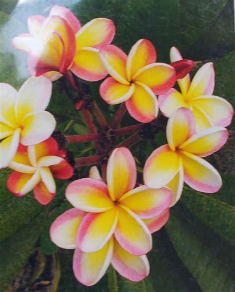 hawaiian quilts  gr hawaiian gift company