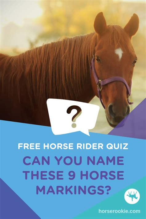 horse quiz markings body quizzes face common knowledge