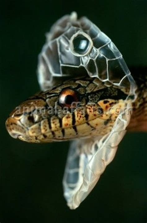17 best ideas about scary snakes on pinterest snakes