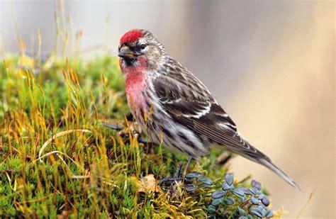 Backyard Birds Omaha by Bird Throat Goldfinches 171 Birds Unlimited