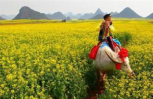 Luoping Rapeseed Fields Travel China With Me