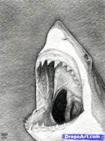 Shark Head Drawing