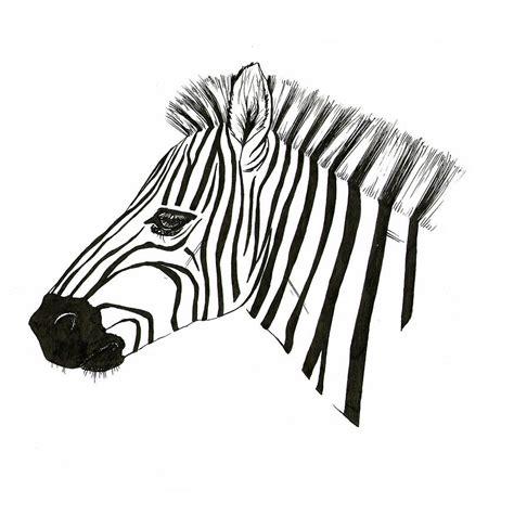zebra drawing  fliss ellis