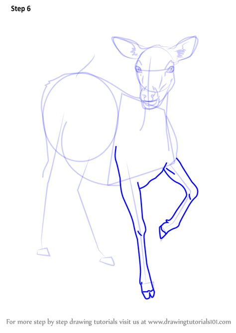 step  step   draw  baby deer drawingtutorialscom