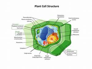 Plant Biology Diagrams