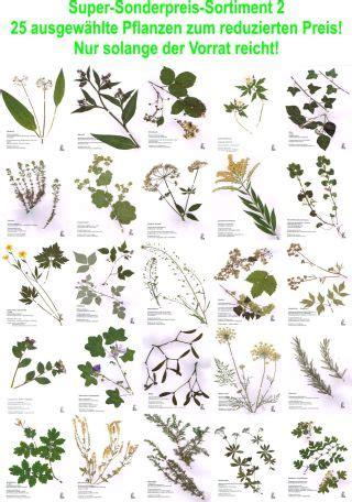 herbarium deckblatt vorlage zum ausdrucken kostenlos