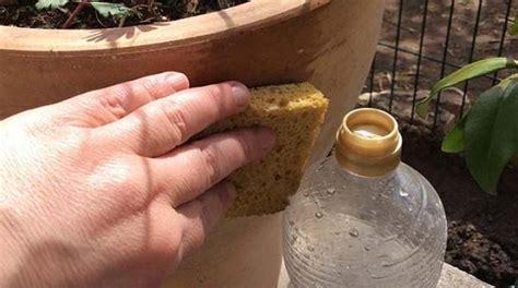 cuisine astuce le truc tout simple pour nettoyer un pot de fleurs taché