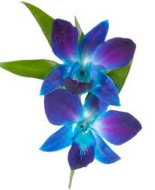 boutonniere prices blue dendrobium orchid boutonniere royer 39 s flowers and