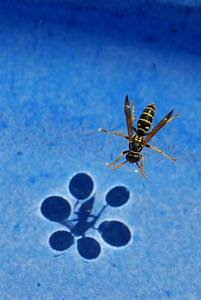 The Shadow of Surface Tension - Neatorama