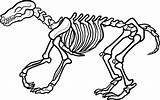 Skeleton Coloring Dinosaur Pages Printable Bones Sheet Outline sketch template