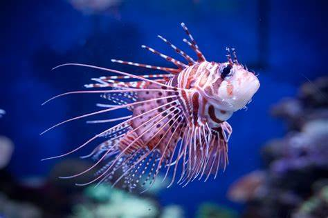10 Cute But Deadly Sea Creatures That Can Attack & Murder Without Thinking Twice