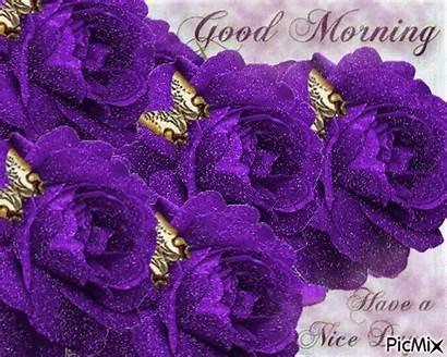 Morning Purple Rose Roses Nice Butterflies Flowers