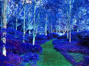 Cool Color Landscape