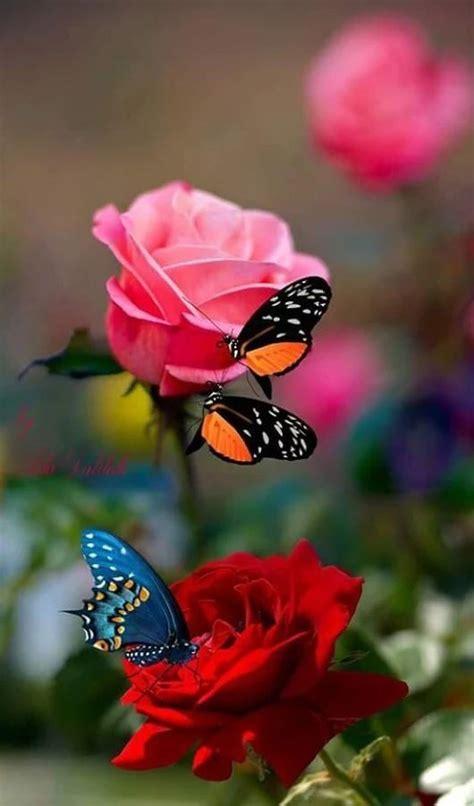 Bellezas de la naturaleza Mariposas de colores
