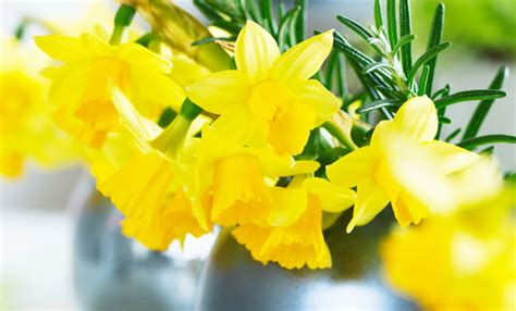 fiori gialli invernali fiori di primavera 3 composizioni per arredare leitv