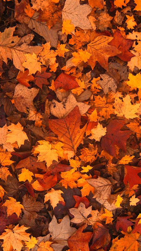 Aesthetic Fall Themed Desktop Backgrounds by Fall Leaves Wallpaper 73 Images