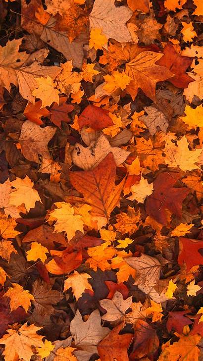 Fall Aesthetic Wallpapers Leaves Phone Iphone Android