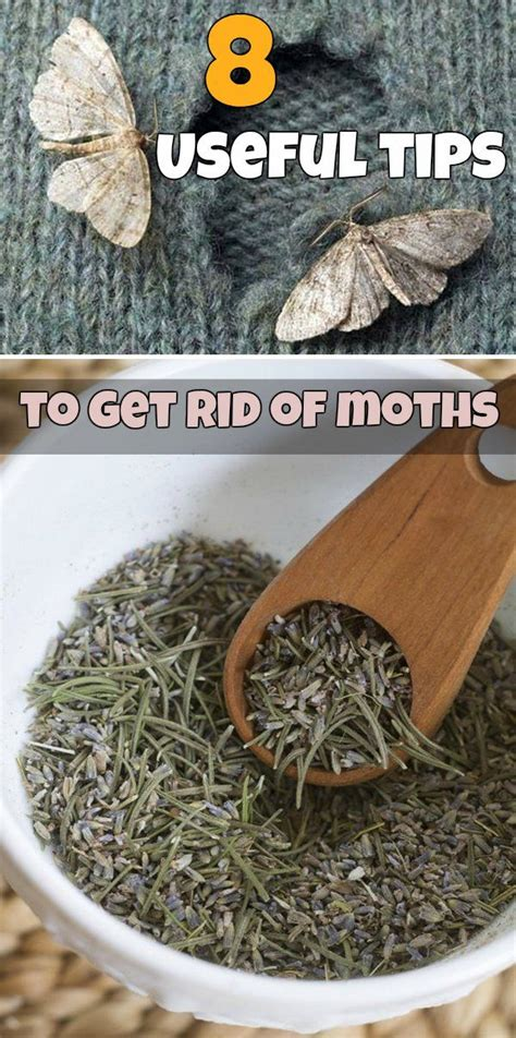 How To Get Rid Of Moths In Closet Naturally by 17 Best Images About Pest On Lavender