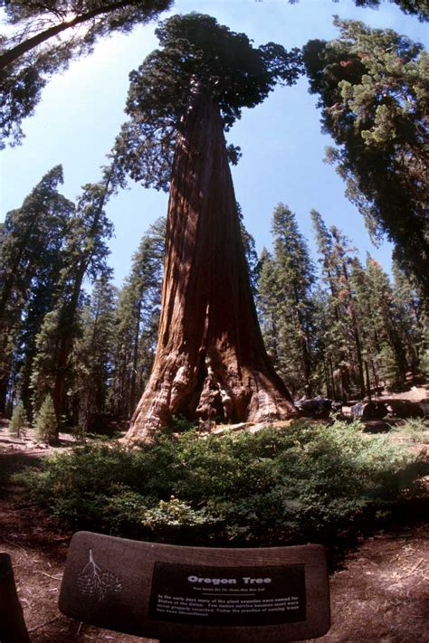 sequoia national park travel information  pictures