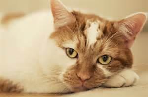 lethargic cat 404 not found