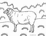 Sheep Coloring Pages Printable Lamb Bighorn Cool2bkids Face Getdrawings Drawing Thecatholickid God sketch template