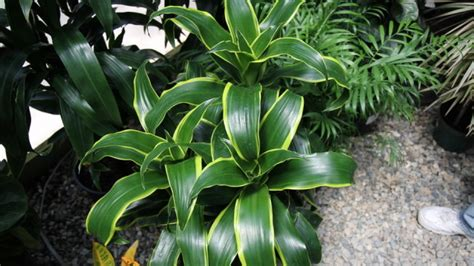 best low light 10 best low light houseplants that are easy to grow the