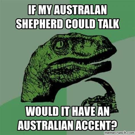 Aussie Memes - australian shepherd meme memes