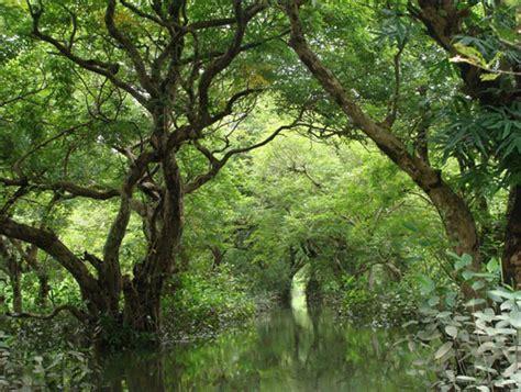 ratargul swamp forest  bangladesh traveling faqs
