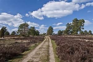 B Und K Winsen : l neburg heath nature park a unique one thousand year old landscape ~ Orissabook.com Haus und Dekorationen