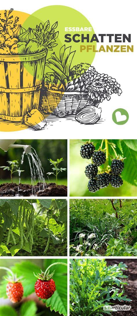 Garten Pflanzen Essbar by Essbare Pflanzen Die Im Schatten Wachsen Garten