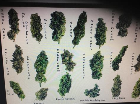 Types Of Weed And Grinders For Android  Apk Download