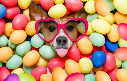 Easter Dog Happy Funny Colorful Eggs Glasses