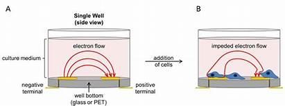 Xcelligence System Rtca Analysis Cell Celular Ols