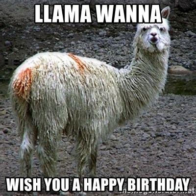 Llama Birthday Meme - llama wanna wish you a happy birthday drama llama meme generator