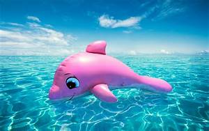 Baby Pink Dolphin Pictures   www.pixshark.com - Images ...
