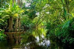 10 tropical rain forests that you should visit at least once in your ...