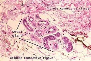 Salisbury U0026 39 S Graduate Histology