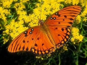 111 Beautiful Butterflies Wallpapers - Hottest Pictures ...