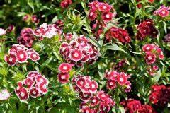 Canna Blüten Abschneiden : bromelie pflegen gie en d ngen umtopfen und mehr ~ Lizthompson.info Haus und Dekorationen
